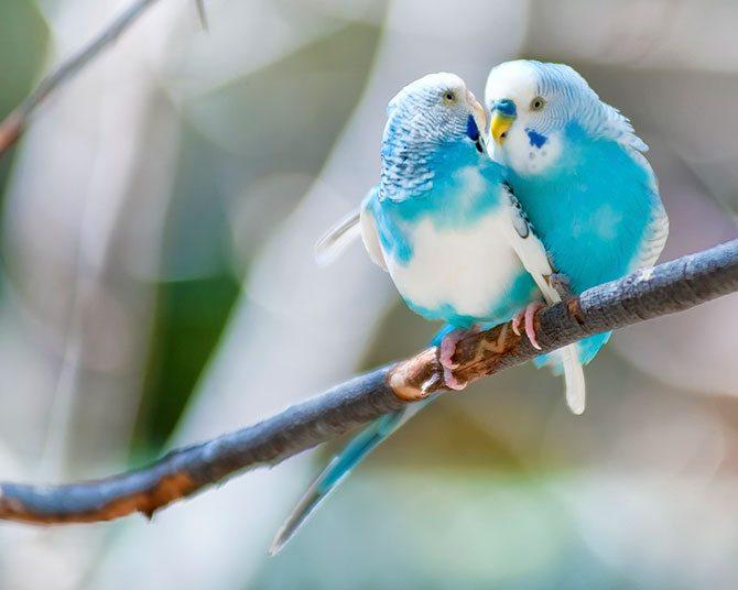 LoveBirds670X500